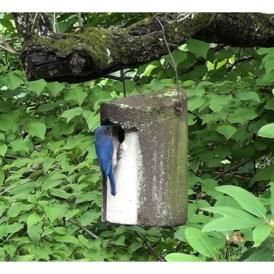 Schwegler Tree Trunk Birdhouse