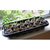 Greenhouse Seed Starter Kit